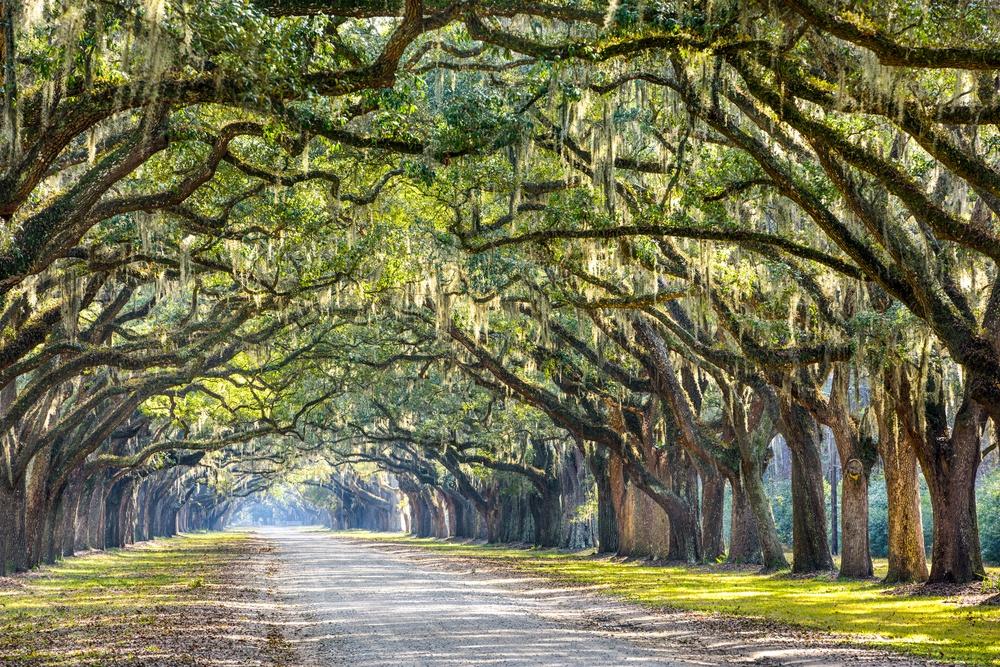 Savannah, Georgia, USA oak tree lined road at historic Wormsloe Plantation..jpeg